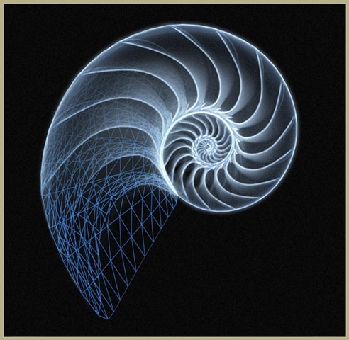 All the Chambered Nautilus Brief summary & Investigation Guide Information